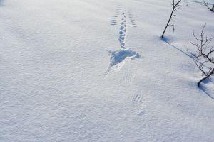 Landung und Start vom Schneehuhn
