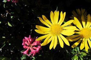 herrliche Blumenpracht